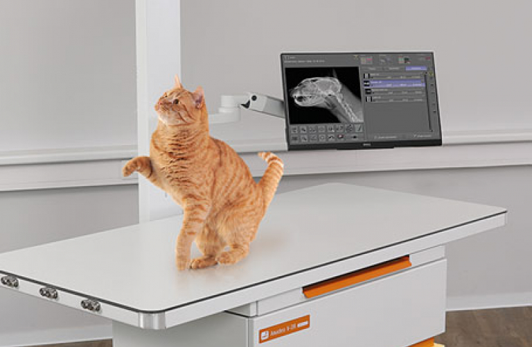 Digital X-ray for vets