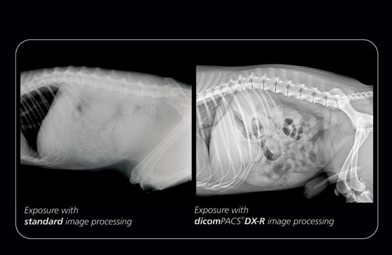 Image comparison: The professional dicomPACS DX-R image processing