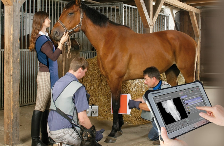 Leonardo DR mini: Portable digital radiology system in a custom-made suitcase for mobile use in stables and clinics