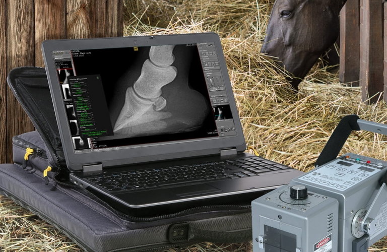 Report module for X-ray services relating to equine prepurchase examinations